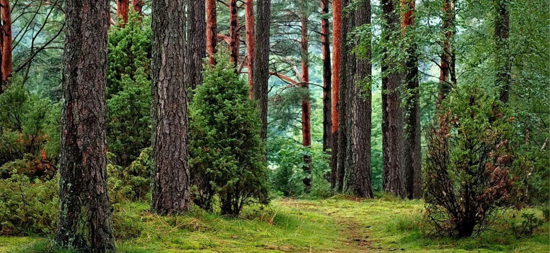 Une balade dans le bois de vincennes